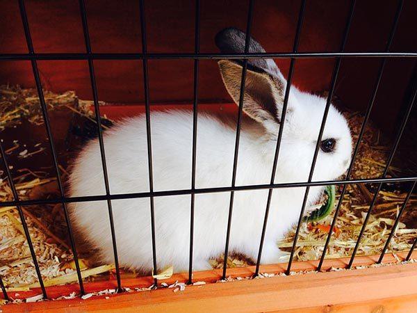 coniglio in gabbia - metafora donne in rinascita
